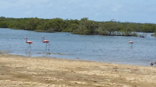 More Flamingos Bon S