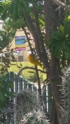 Birdie Bon 3