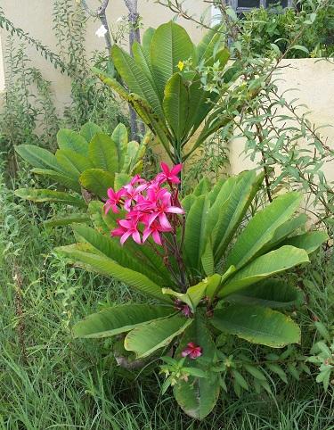 Nice Flower, Bon 3