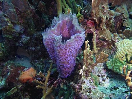 Azure vase sponge 4, MH