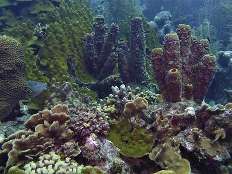 Sponge view, MH